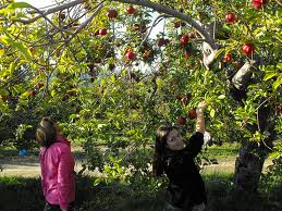 Outhouse Orchard