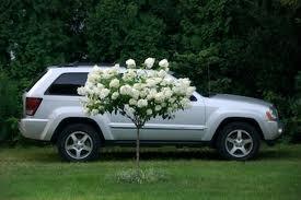Hybrid car rental nyc