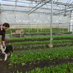 An Eco-cation: Stone Barns Center for Agriculture and Food