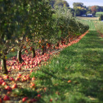 Get Picky: 6 Apple Orchards Near NYC