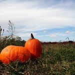 offManhattan guide to pumpkin picking