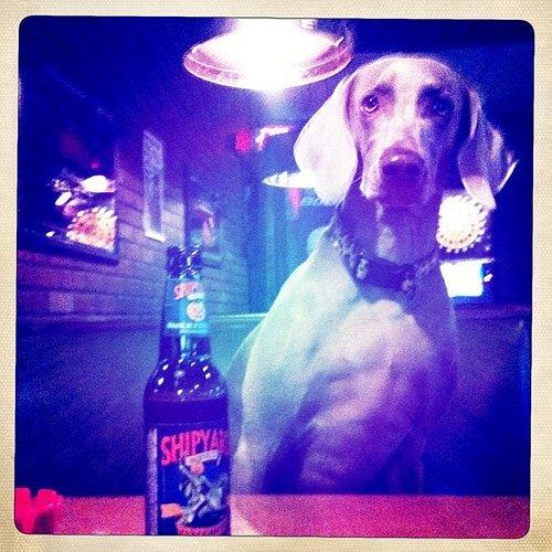 Lic Bar Dog Friendly