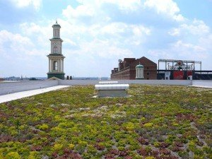 Green roof at Hilton Convention Center