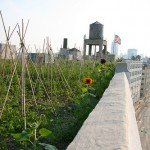Herban Living: Your Guide to Five Community Farms in NYC