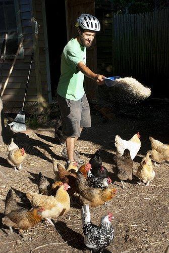 Mark Stonehill feeding the chickens on way to his apprenticeship at Quail Hill Farm in Amagansett, Long Island.