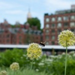Bee on the Highline