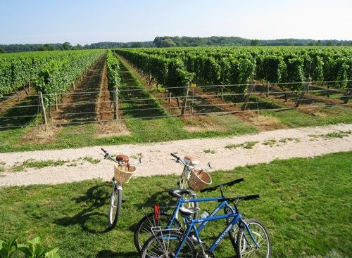 bike ride through north fork vineyards