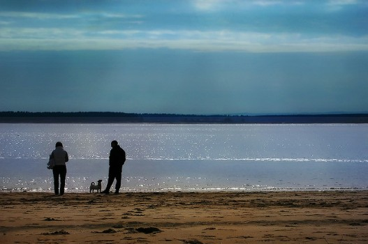 Dog-Friendly Beaches Near NYC