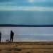 Dog-Friendly Beaches Near NYC thumbnail