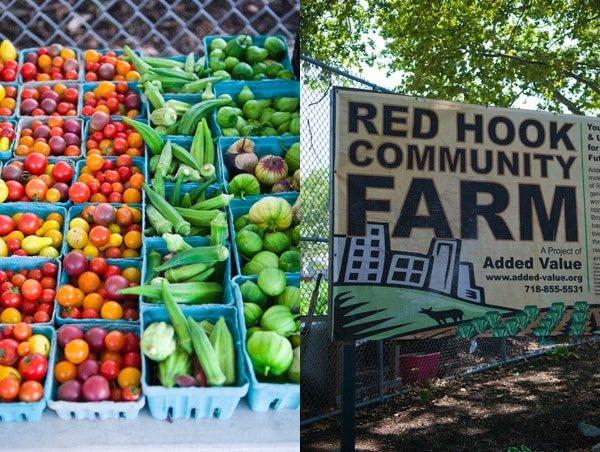 Red Hook Farm in happier times