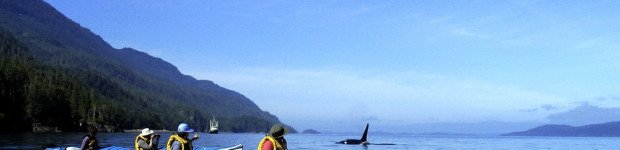kayaking with whales in quebec