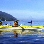 Five Great Outdoor Adventures: From Kayaking With Whales to Climbing Trees