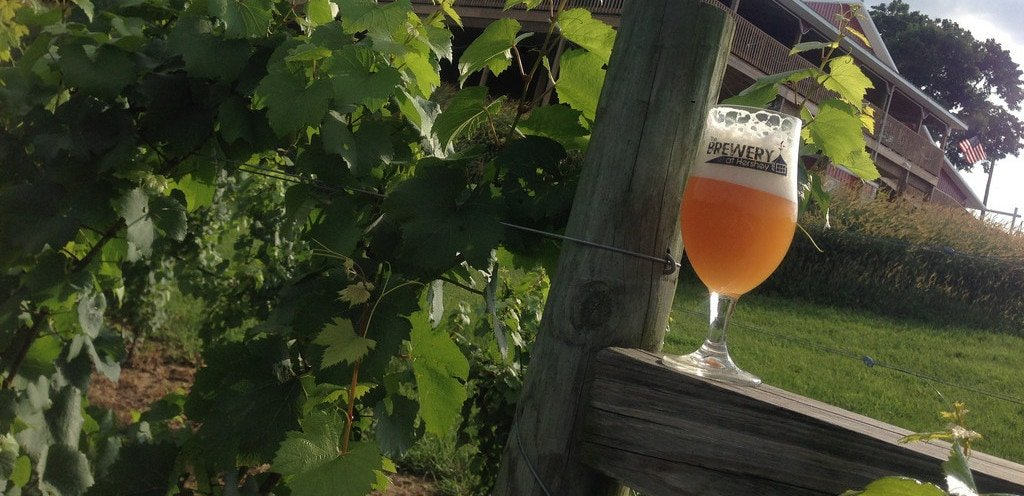 The vineyard and brewery at hershey