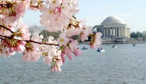 Take a stroll along the Tidal Basin in the spring to catch a glimpse of the Jefferson Memorial and the iconic Cherry Blossom trees