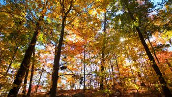 Fall hike in Palisades Park