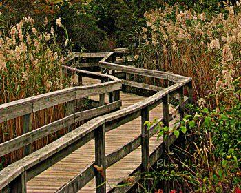 Long Island Fire Island Boardwalk