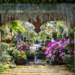 NYBG_The_Orcihd_Show_2017_06