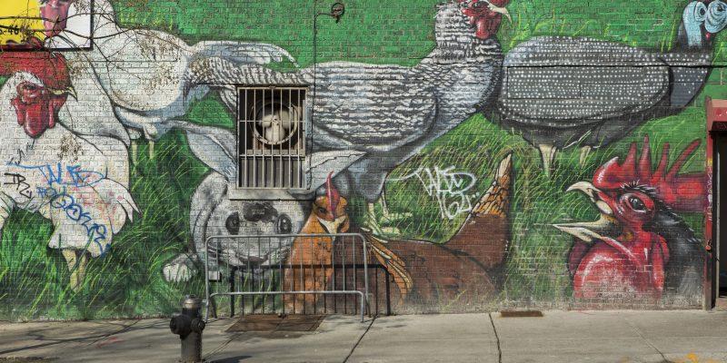 street art in Bushwick of chickens