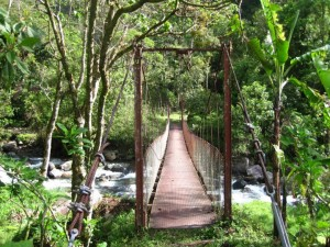 Hiking through cloud forest with Boquete Outdoor Adventures