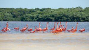 Celestun Flamingo Reserve _0107