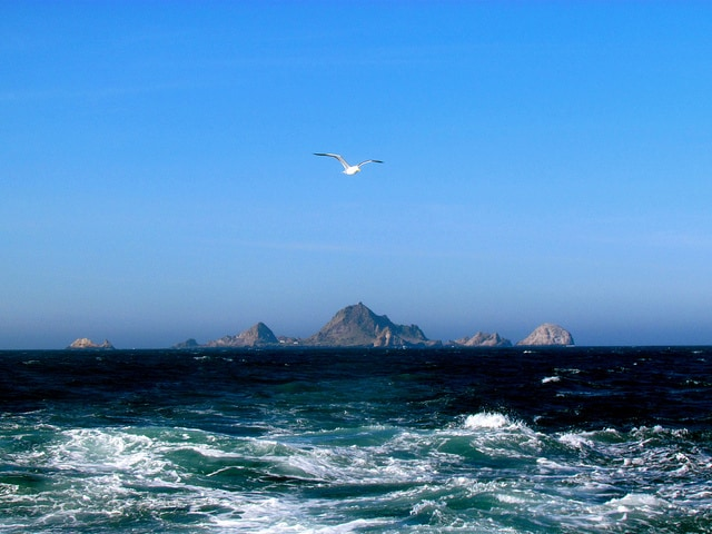 #1 Top Photography Spot: The Farallon Islands