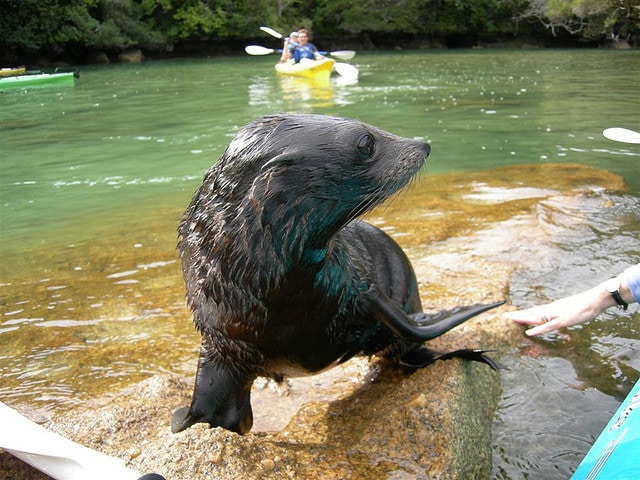 Sea Otter Kayaking Adventure