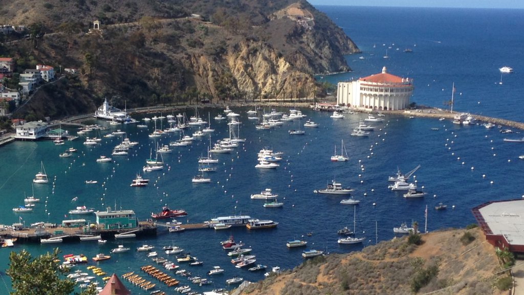 Pet Friendly Hotels Avalon Catalina Island