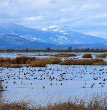 hunting in CA