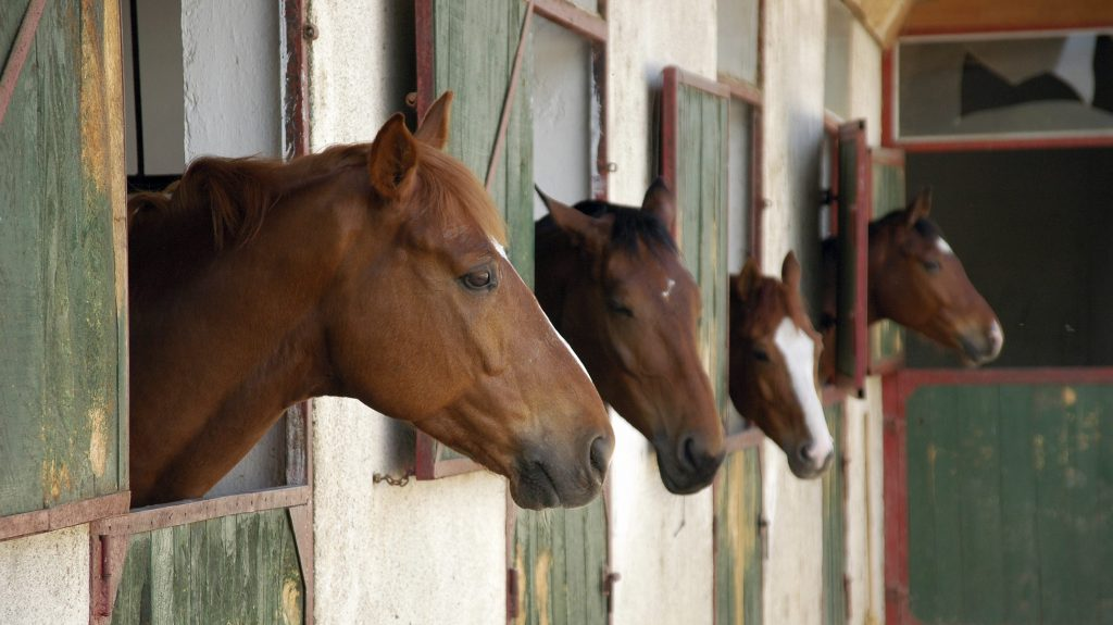 horses in stable at riverdale equestrian center in the bronx
