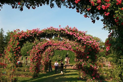 new haven gardens
