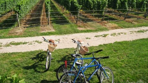 Corey Creek Vineyard bike