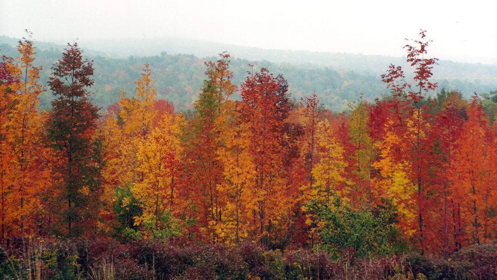 finger lakes fall foliage