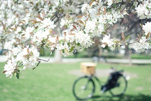 Bike the Cherry Blossom Festival