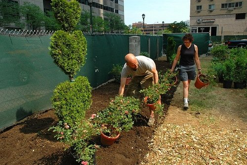 planting at PHS garden