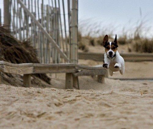 P-town dog beach
