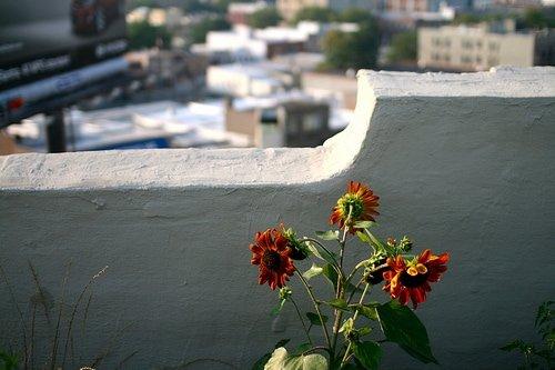 rooftop farm