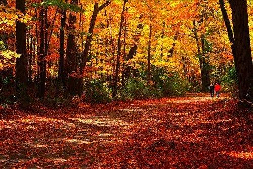 Fall Foliage Escapes