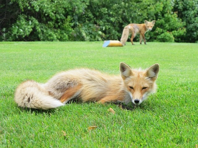 fox meadow pei
