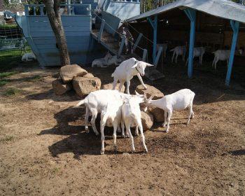 Catapano Dairy Farm