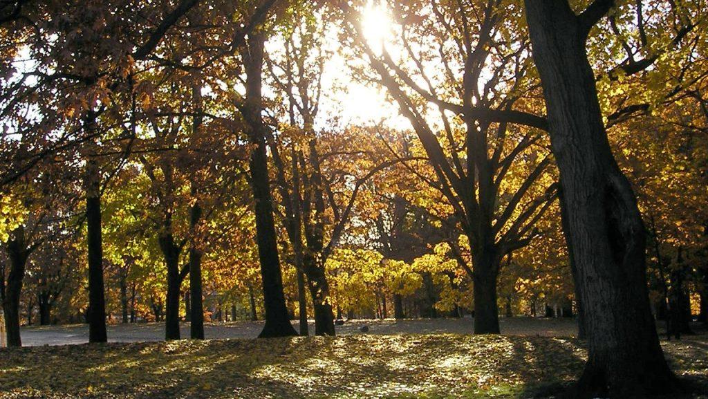 Irvington Forest