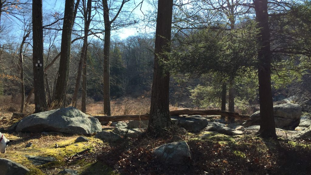 harriman state park forest
