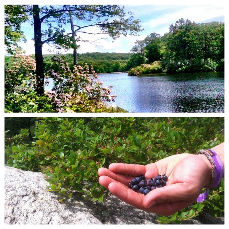 blueberry picking and lakes