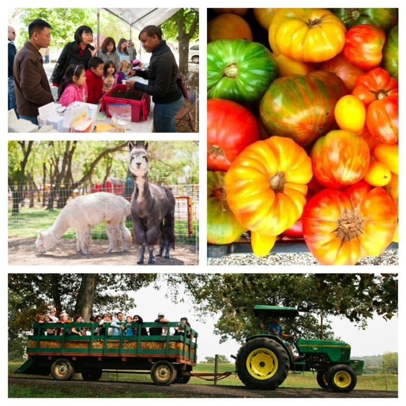 Farm fun fall
