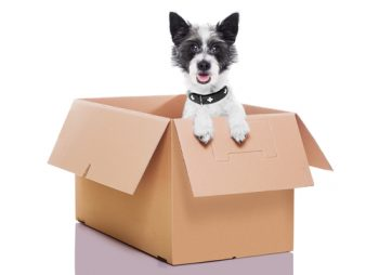 pet moving