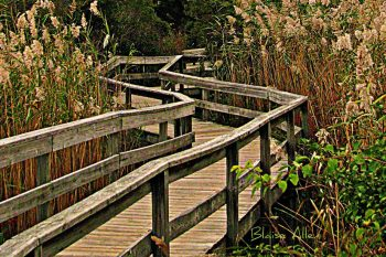Long Island Fire Island Boardwalk