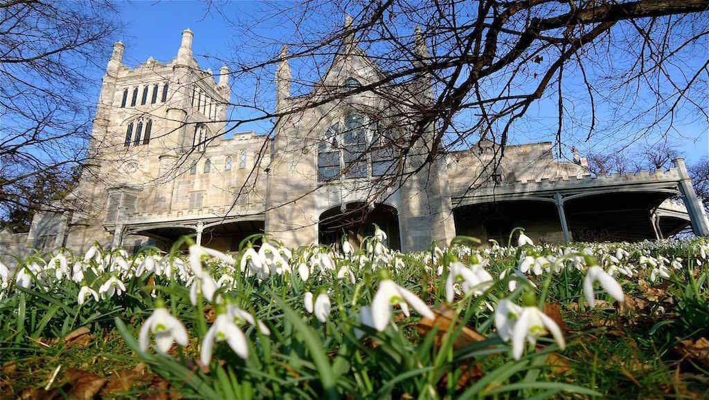 Lyndhurst snow drops by Christopher Radko