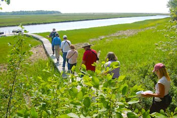 Guided walk thru the salt marsh