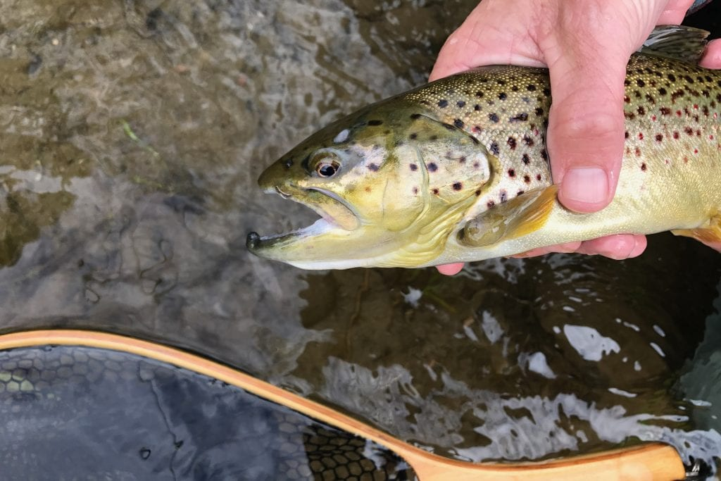 Fly Fishing Catskills