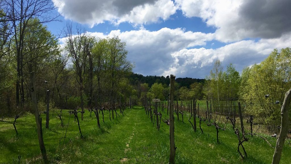 Neshobe River Winery Brandon VT