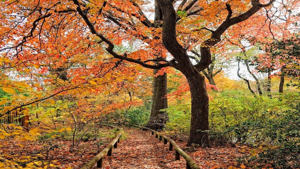 Brooklyn Botanical Gardens Fall Foliage